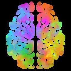 cropped-cropped-logo_neurodiversite_fond_transparent1.png